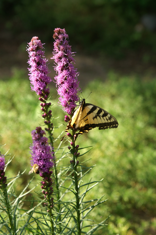 butterfly-on-flower